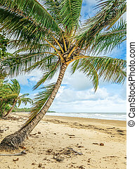 Palm trees - An image of a nice beach with palm trees
