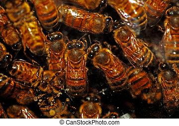 miel, abejas