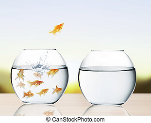goldfish jumping out of water - goldfish jumping out of the...