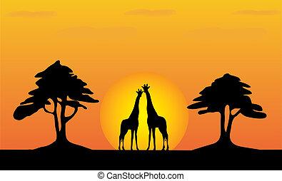 Giraffes - safari sunset