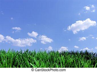綠色, 草, 藍色, 天空