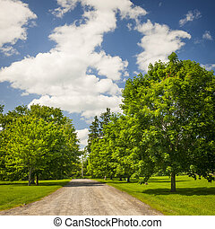 Rural landscape with maple trees - Summer landscape with...