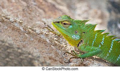 Green chameleon on the sand