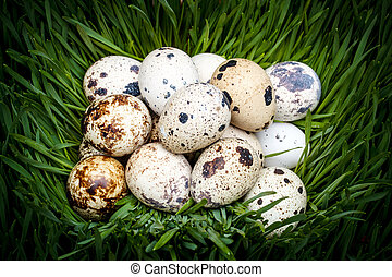 Spotted quail eggs - Close-up of spotted quail eggs in green...