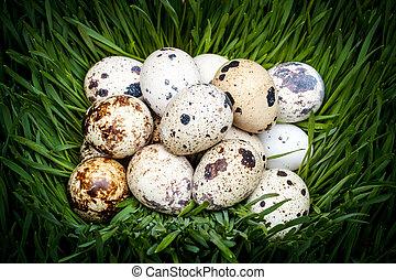 manchado, codorniz, huevos