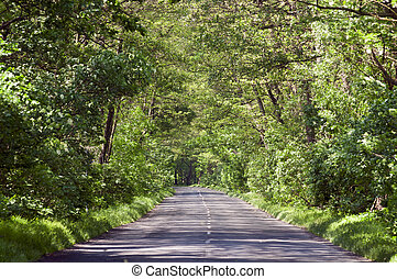Empty country road in tree tunel with green leaves