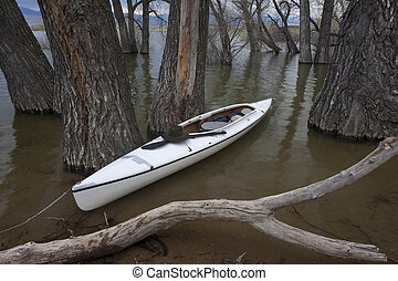 white canoe on lake with submerged forest
