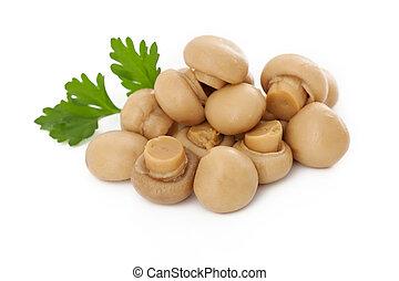 pequeno, cogumelos