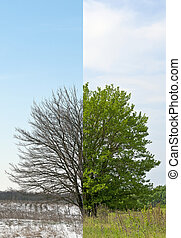Winter- and springtime tree fifty-fifty in one picture...