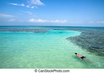 Caye Caulker, Belize - A dive in the sea of Caye Caulker,...