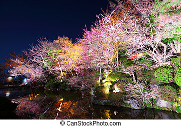Sakura and river at night
