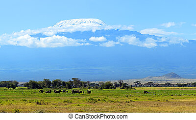 Amboseli elephants - Elephants family on African savanna....