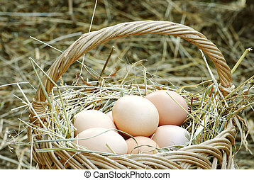basket with eggs recently collected from a nest