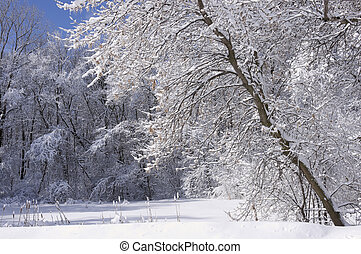 Marthaler Park Forest in Snow - Frozen marsh and trees under...