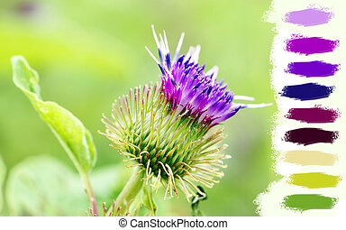 Thistle purple flower - Great floral background with purple...