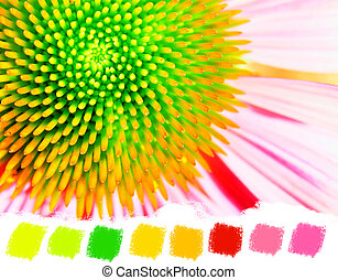 Neon echinacea or purple coneflower color palette - Bright...