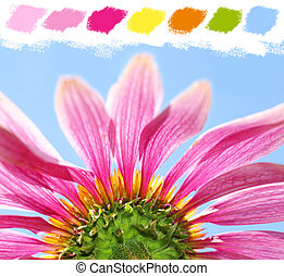 Under a coneflower color palette - Under a coneflower,...