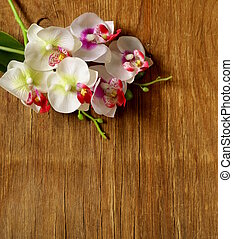beautiful white orchid flowers on a wooden background