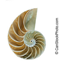 Nautilus shell - great detailed shot - Amazing spiral...