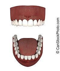 dentures - image of dentures