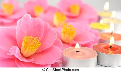 Camellia flowers and candles - Pink camellia flowers and...