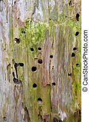 Detail of a tree with woodworm holes