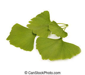 Green autumn leaves of Ginkgo biloba on white background
