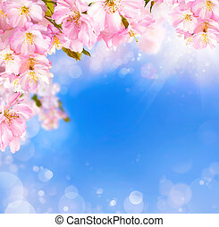 Cherry blossoms background - Blue and pink background with...