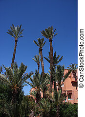 Moroccan palm trees - Palm trees with traditional Moroccan...