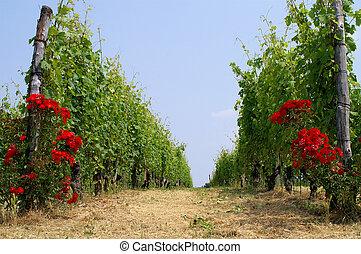 viña, Italia