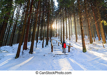 winter forest, Rusinowa Polana, High Tatras, Poland