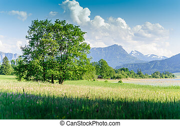 Tree in a austrian summer landscape, taken in salzkammergut