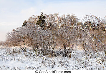 winter snowy landscape at sunset - photo of frozen trees in...