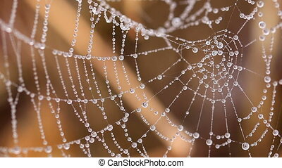Beautiful spider's web