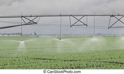 Agriculture, watering of pea field - Irrigation system for...