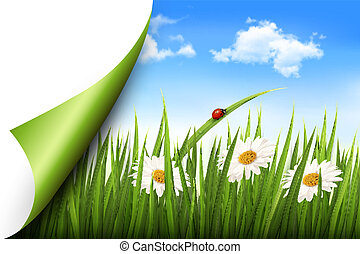 Spring background with flowers, grass and a butterfly Vector...