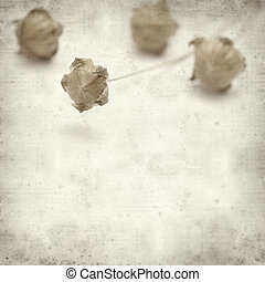 textured old paper background with dry flax plant capsules
