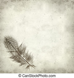 textured old paper background with Guineafowl feather