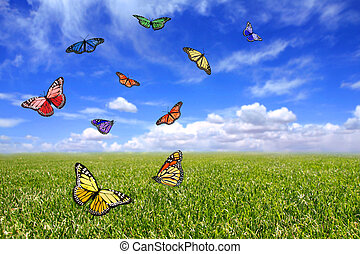 Beautiful Butterflies Flying Free in an Open Field of Grass...