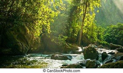 Creek flowing between rocks in the rainforest