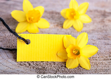 Yellow Empty Tag - Empty Yellow Tag wih Copyspace as Spring...