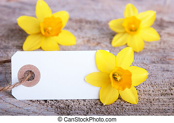 Empty White Tag with Narcissus in the Background with...