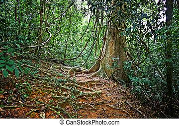 taman negara - detail of jungle in taman negara borneo