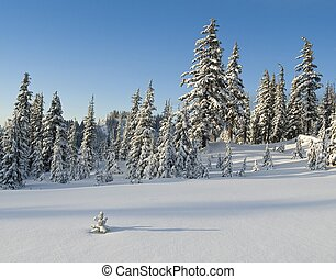 Winter alpine meadow
