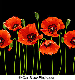 Red poppies in a row. - Red poppies in a row on black...