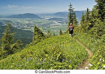 Alpine meadow hiker - A male hiker stops along a wildflower...