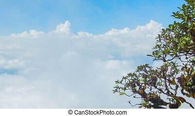 Tree on background of clouds. View from top of mountain....