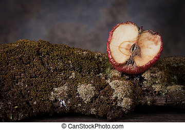 Dry rot apple on  old tree with moss.