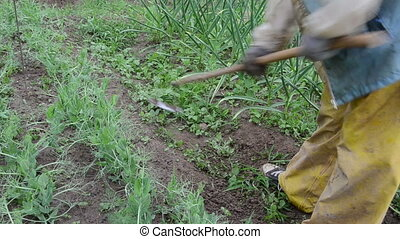 gardening work - worker with a hoe grub weeds of vegetable...