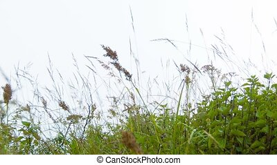 Meadow grass sway in the wind Highland slope - Video...